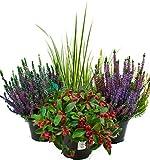 Herbst Blumen Set Nr.6 Calluna vulgaris Trios Milka & Wildbeery, Scheinbeere & Gras grün/weiss