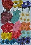 HANDI-KAFU Multiple Dried flowers, Pink Larkspur, Mini Rose, Hydrangea, Daisy, real pressed dried flowers