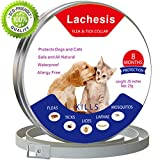 Best Flea Collar For Dogs - Anti Flea and Tick Collar for Dogs, Best Review