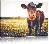 Einzelne Kuh auf Butterblumenwiese in der Abendsonne, Format: 120x80 auf Leinwand, XXL riesige Bilder fertig gerahmt mit Keilrahmen, Kunstdruck auf Wandbild mit Rahmen, günstiger als Gemälde oder Ölbild, kein Poster oder Plakat