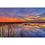 Merlin65Scott USA Everglades Swamp Florida Natur Poster Kunstdruck auf Leinwand