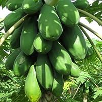 Hai original frutales enanos semillas de papaya, papaya miniatura, papaw nuevo jardín híbrido decoración vegetal envío 6pcs J15