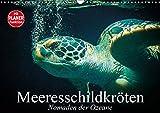 Meeresschildkröten. Nomaden der Ozeane (Wandkalender 2019 DIN A3 quer): Die bedrohten Überlebenskünstler und Nomaden unserer Weltmeere (Geburtstagskalender, 14 Seiten ) (CALVENDO Tiere)