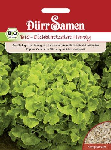 Salatsamen – Bio Eichblattsalat Hardy grün von Dürr-Samen