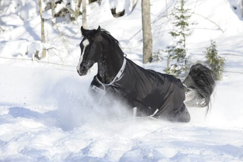 BUCAS Outdoor Pferdedecke SMARTEX RAIN, schwarz, 145