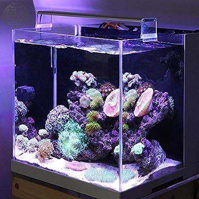 Marine LED Corail SPS LPS Aquarium réservoir de récif de mer Blanc Bleu Style Court Spirited Away