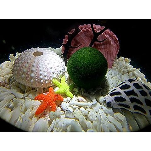 LED Aquarium Marimo Kit - 6