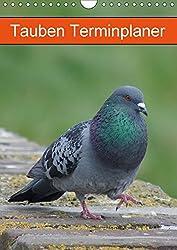 Tauben Terminplaner (Wandkalender 2018 DIN A4 hoch): Echte Schönheiten (Planer, 14 Seiten ) (CALVENDO Tiere) [Kalender] [Apr 01, 2017] Kattobello, k.A.