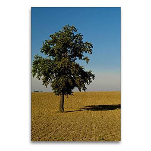 Calvendo Premium Textil-Leinwand 60 cm x 90 cm hoch, Ein Motiv aus Dem Kalender Fest verwurzelt - Faszinierende Bäume im Wandel der Jahreszeit   Wandbild, Bild Leinwand, Leinwanddruck Natur Natur