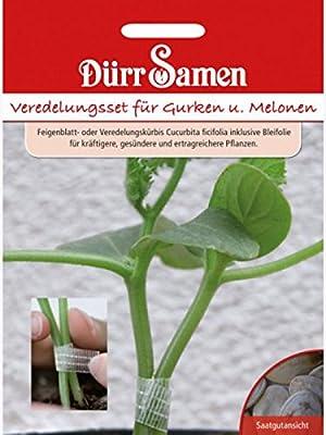 Veredelungs-Set für Gurken und Melonen von Dürr-Samen auf Du und dein Garten