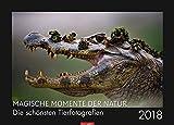 Magische Momente der Natur - Kalender 2018: Die schönsten Tierfotografien