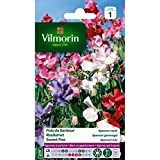 Vilmorin Garten–Platterbse Spencer variiert Serie...