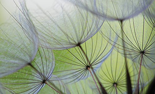 olimpia-design-271vexxxl-fototapete-vlies-mehrfarbig-002-x-416-x-254-cm