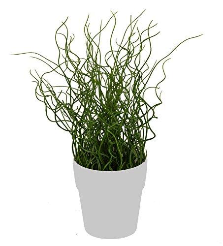 artfleur - künstliches Gras Liebeslocken 40cm Kunstpflanze Grünpflanze