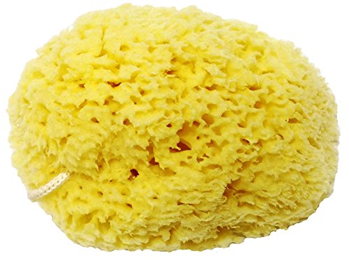 honeycomb-natural-sea-sponge-strong-and-durable-suitable-for-both-children-and-adults-for-use-in-bat