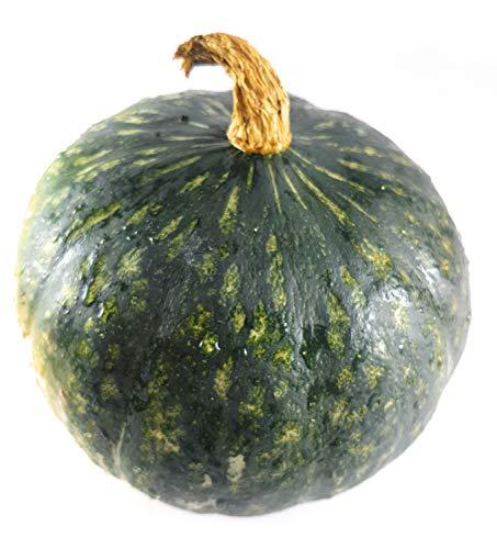 1 Hokkaido Shokichi green - Gewicht ca. 0.3 kg - 0.7 kg - frisch vom Gärtner - Suppenkürbis - Speisekürbis - Kürbis