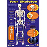 Your Skeleton