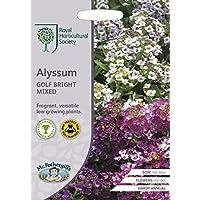 Steinkraut Duftsteinrich Alyssum Königsteppich violett einjährig 6-10 cm Samen