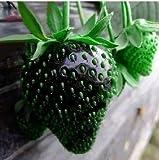 Lamdoo 100x Rare Black Strawberry Berry Seed Nahrhafte Früchte Pflanzenfrischer Samen (Schwarz)