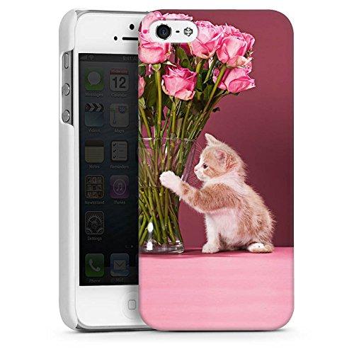 Apple iPhone 4 Housse Étui Silicone Coque Protection Bébé chat Kitten Chat CasDur blanc