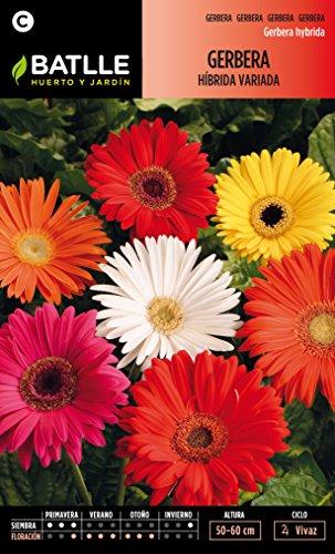 semillas-batlle-094001bols-gerbera-hibrida-variada