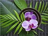 Posterlounge Forex-Platte 130 x 100 cm: Tropical Zen Orchid von Andrea Haase Foto