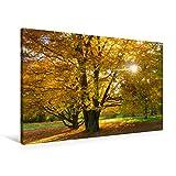 Premium Textil-Leinwand 90 x 60 cm Quer-Format Herbstbaum an der Frühlingstraße   Wandbild, HD-Bild auf Keilrahmen, Fertigbild auf hochwertigem Vlies, Leinwanddruck von Michael Bogumil