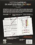 Image de Netter. Cuaderno De Anatomía Para Colorear - 2ª Edición (+ StudentConsult)