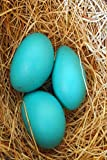 Journal Three Blue Robin Eggs Bird's Nest paperback contains alternating blank pages and lined pages. This allows you the freedom to express yourself with words or images.  Blank pages also provide the option to paste pictures or clippings like a scr...