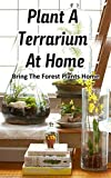 Plant a Terrarium at Home: Bring the Forest Plants Home