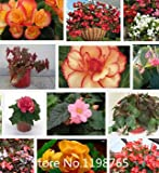 2015 Rushed Mini Gartenkräuter Mini Pflanzen Samen Bonsai Hot Chili Peppers, Pfeffer Samen, Paket Gemüse Samen Über 50 Partikel