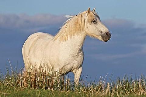 Welsh Pony Grußkarte. Pferd Mottoparty, blanko auf der Innenseite für jede Nachricht. Umschlag inklusive. Große A5Größe. Foto (Horsey Pony)