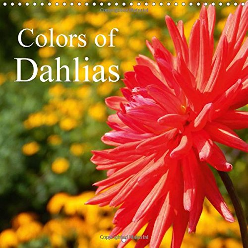 colors-of-dahlias-wall-calendar-2017-300-x-300-mm-square-dahlias-delight-us-with-their-beautiful-col