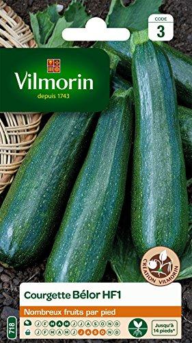 Vilmorin 3486443 Pack de Graines Courgette Belor HF1 Obtention
