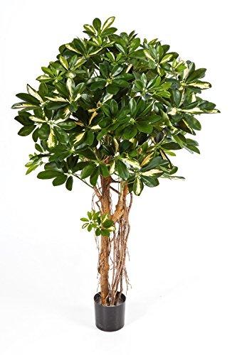 artplants Set 2 x Künstliche Schefflera Naturell, getopft, grün – weiß, Lianen, 140 cm – Künstliche Zimmerpflanzen