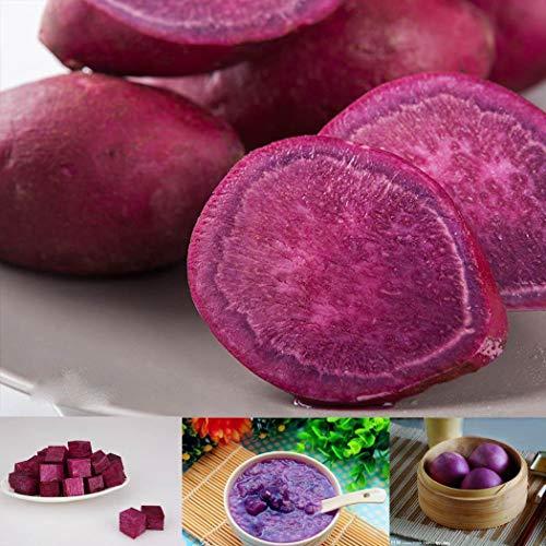 Soteer Garten - 50 Stück Blaue Süßkartoffel Samen, Bio Pflanzkartoffel Spezialität Kartoffel Gemüsesamen mehrjährig winterhart für Garten Balkon/Terrasse