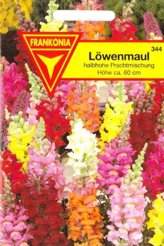 Löwenmaul, Antirrhinum majus, ca. 400 Samen
