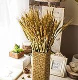 ysber 100PCS Getrocknete Ast Weizen & Trocknen von Natur Stamm für Natur Weihnachten Hochzeit Home Office Decor weizenfarben