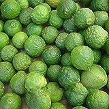 Pinkdose20 Stücke Limettensamen Citrus Aurantifolia Bio Obst Samen Zitrone Baum Bonsai für Hausgarten