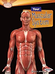 Your Muscular System (Searchlight Books: How Does Your Body Work? (Paperback)) by Rebecca L Johnson (2012-08-02)