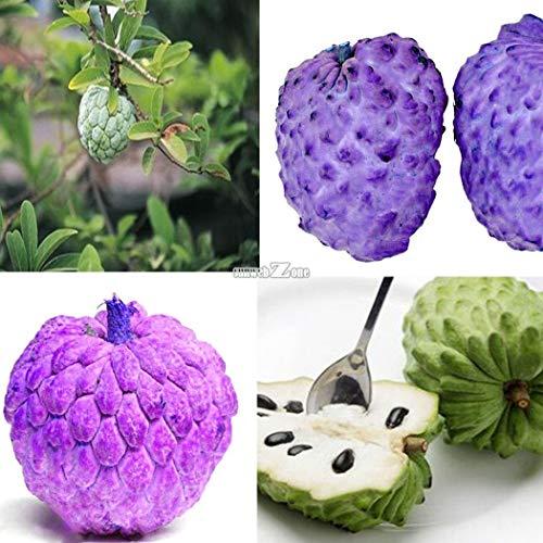 Go Garden Type2: 10Pcs jardin délicieux fruits Arbre Lychee Graines RR6