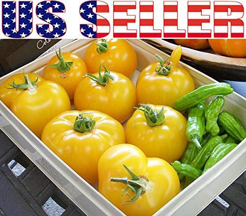 Plantree 50+ Graines - Brandywine Yellow: 50+ Graines de Tomate Jaune Brandywine de culture biologique, Heirloom non productif