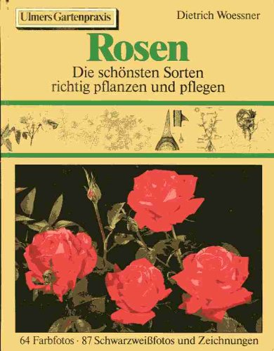 Rosen Sorten europäischer