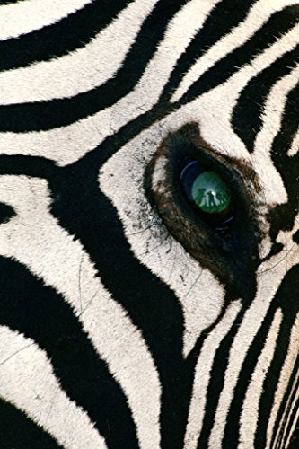 Berlin - Carta da parati Wall Paper On Demand - Foto Carta da parati - Animali - Trophy Hunters Reflected In Zebra - & # (Zebra Eye)