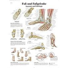 3B Scientific Lehrtafel laminiert - Fuß und Fußgelenke - Anatomie und Pathologie