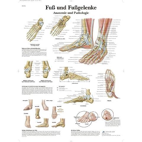 3B Scientific VR0176UU - Póster de anatomía escrito en alemán, diseño de pies y tobillos