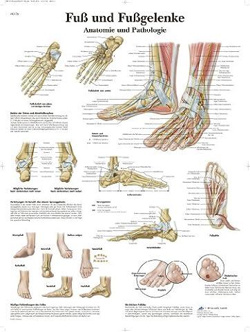 3B Scientific Lehrtafel - Fuß und Fußgelenke - Anatomie und (Formazione Tedesco)