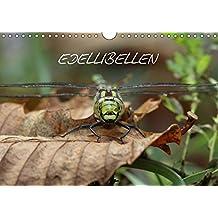 EDELLIBELLEN (Wandkalender 2017 DIN A4 quer): Vom Schlupf zur Blaugrünen Mosaikjungfer (Geburtstagskalender, 14 Seiten ) (CALVENDO Tiere)