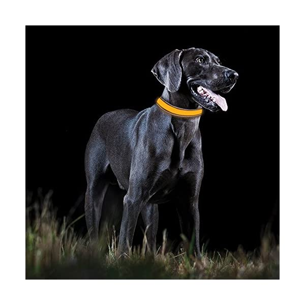 Tractive LED Dog Collar 3