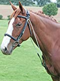 AVIEMORE CHAMBON TRAINING AID, ALLENAMENTO LEARNING, TEACHING HORSE EQUESTRIAN